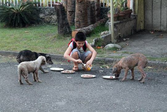 d25 Little Lad Rescues Dogs, Internet Responds In Amazing Way