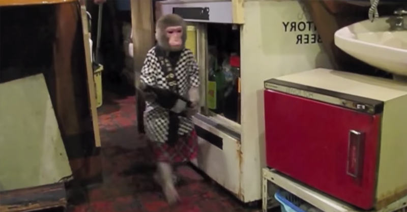 220 This Tavern In Tokyo Has An Actual Monkey Waiter