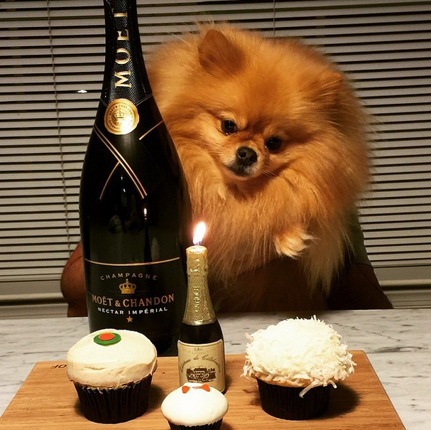 65 These Rich Dogs Of Instagram Are Living A More Glamorous Life Than You Are