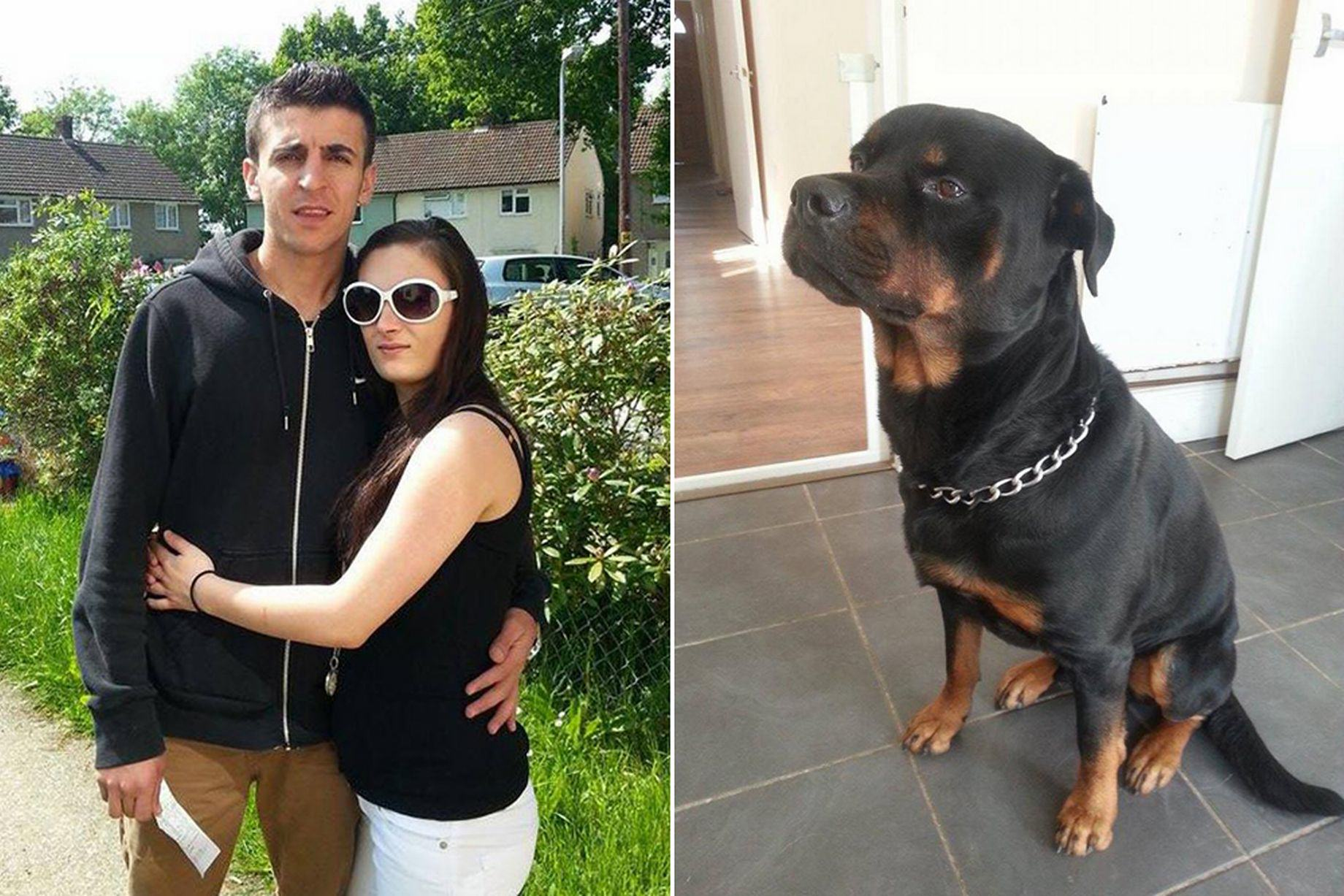 Hero Dog Saves Pregnant Woman From Knifepoint Attack By Gang hero