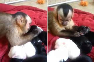This Monkey Stroking A Litter Of Puppies Is The Cutest Thing We Have Seen