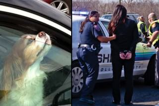 Police Make Woman Sit In Hot Car After She Locked Her Dog Inside It
