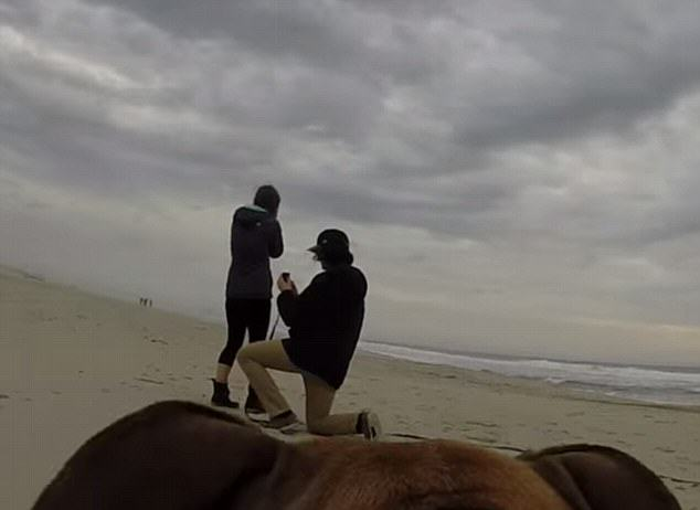 proposal Guy Straps GoPro To His Dog To Secretly Film His Proposal