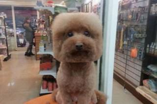 Square Faced Dogs Are Now a Thing In Taiwan