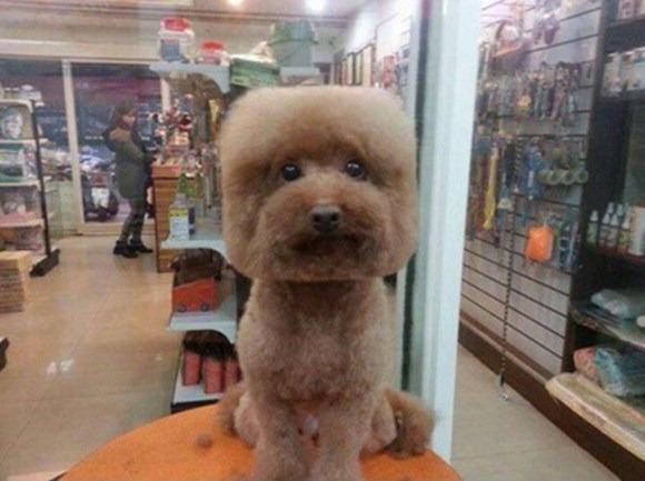 square Square Faced Dogs Are Now a Thing In Taiwan