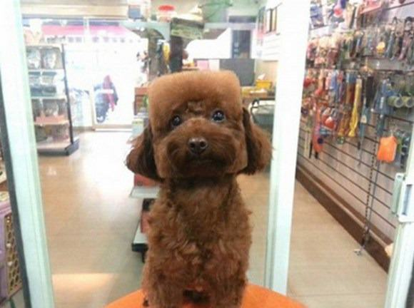 Square Faced Dogs Are Now a Thing In Taiwan square1
