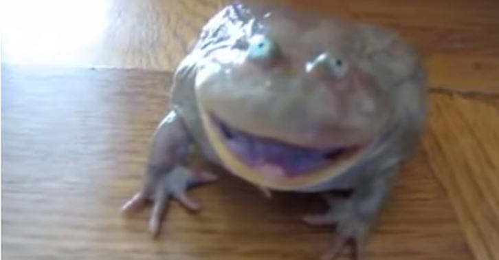 thubnizznay Frog Has The Strangest Response To Being Touched Ever
