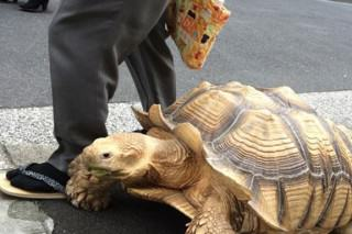 Elderly Man Casually Walks His Giant Tortoise Through Japan Streets