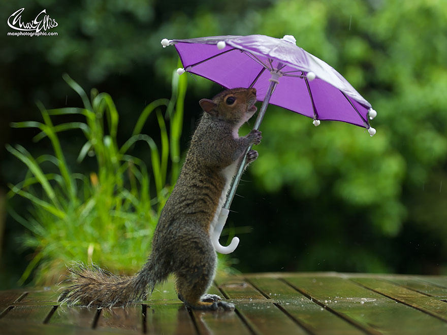 1116 Photographer Gives Squirrel A Tiny Umbrella, Takes Best Photos EVER