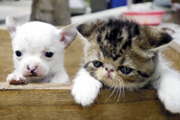 216 World First As Cat Gives Birth To A Dog