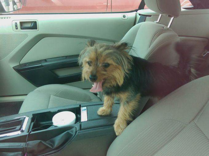 219 Man Arrested After Breaking Into Hot Car To Save A Dog