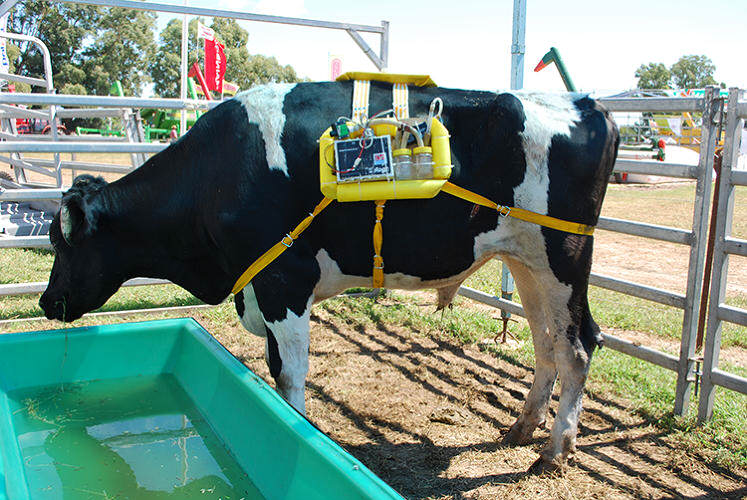 34 Backpacks For Cows Collect Their Farts And Use Them For Energy
