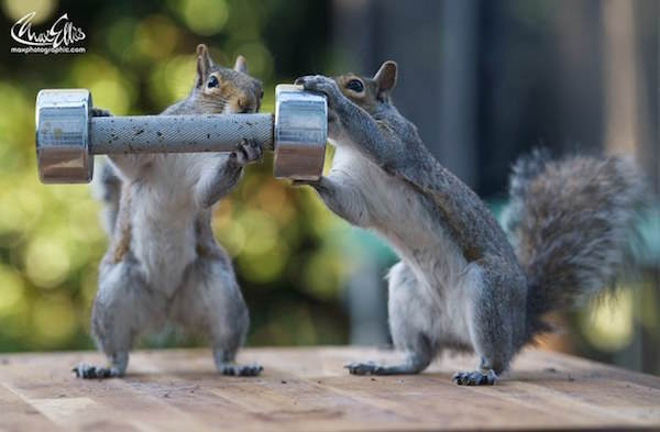 This Guy Found A Way To Photograph Squirrels Lifting Weights 4