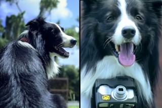This Dog Takes Photos When It Gets Excited Via Heart Rate Monitor Camera