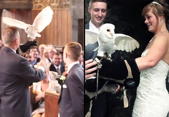owl wedding WEB Owl Delivers Rings During Wedding Because Who Needs A Best Man?
