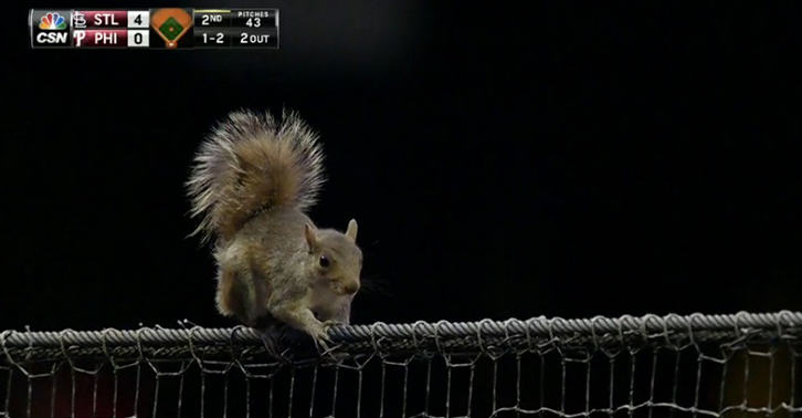 TN182 A Squirrel Steals The Show At A Baseball Game By Divebombing Into The Dugout