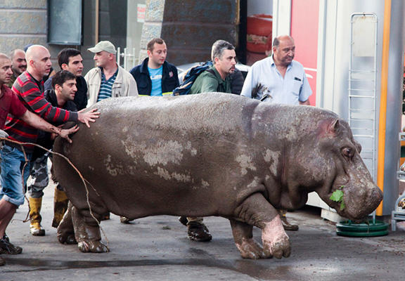 thai web Animals Roam Through Streets Of  Tbilisi After Flood Destroys Zoo