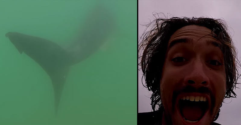 152 Nutcase Surfer Pursues Great White Shark With His GoPro