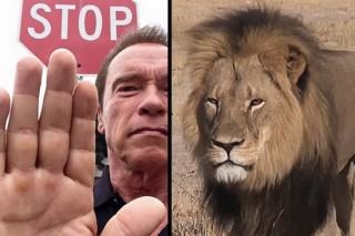 Arnold Schwarzenegger Gives His Verdict On Those Who Kill Big Cats