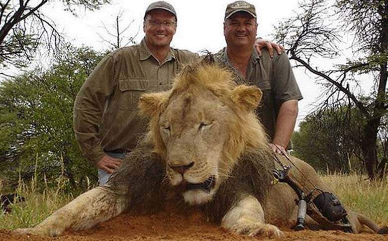 55bb4813d2f87 Zimbabwe Demands Extradition Of Cecil The Lion Killer Walter Palmer