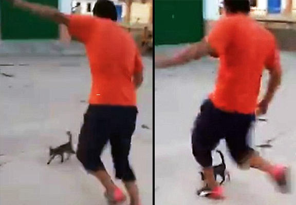 cat kick WEB Shocking Video Of Boy Kicking Small Cat Through The Air Causes Outrage