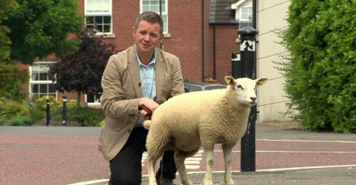 sheep re fb BBC Reporter Shows Exactly Why Animals And Live TV Do Not Mix
