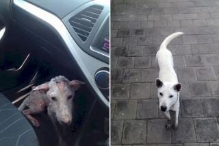 This Desperate Dog Jumped Into Somebody's Car And Her Life Was Never The Same Again