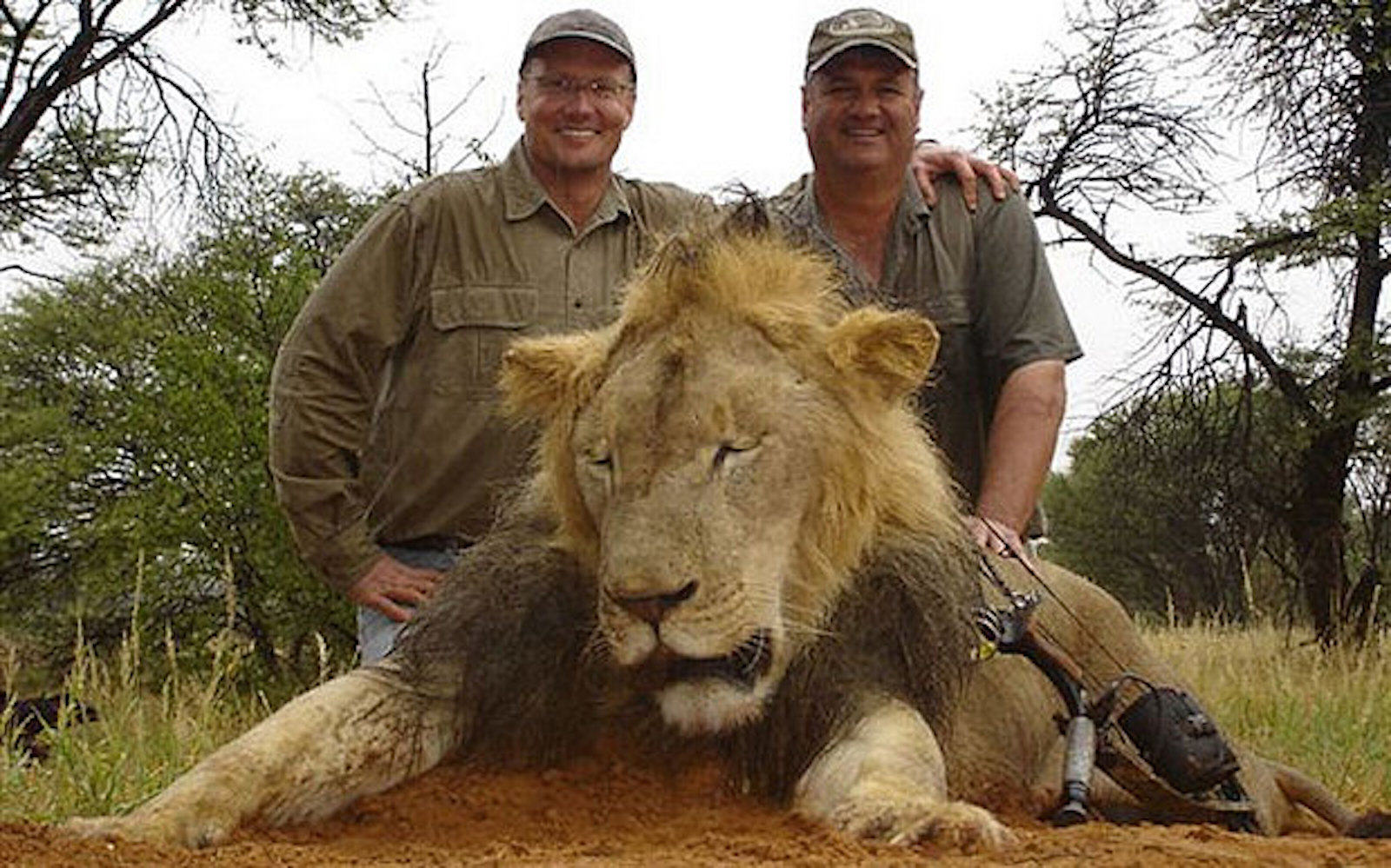 Cecil The Lion Killer Walter Palmer Has Finally Spoken Out UNILAD 5obw6pvl4juvybcaliapox0nze6ljazbanba9drrcqlwcjoxqcltyyisy9yybyv27