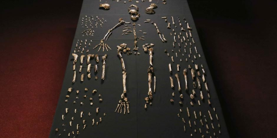 UNILADs Huge Discovery As New Species Of Human Found In South Africa image