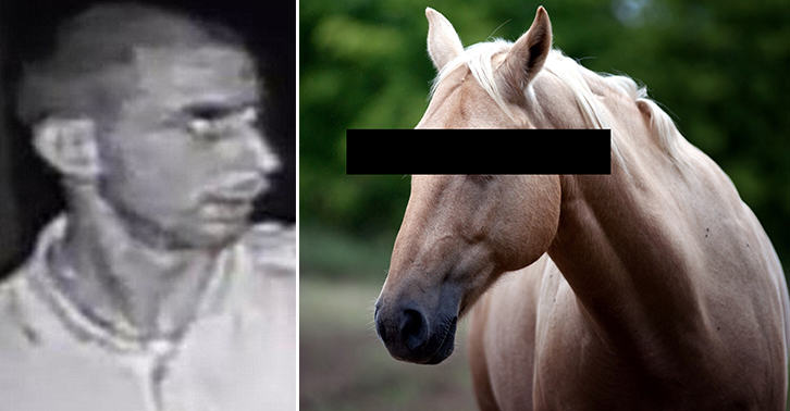 UNILAD TN176 Married Father Of Three Pleads Guilty To Sexually Assaulting A Horse