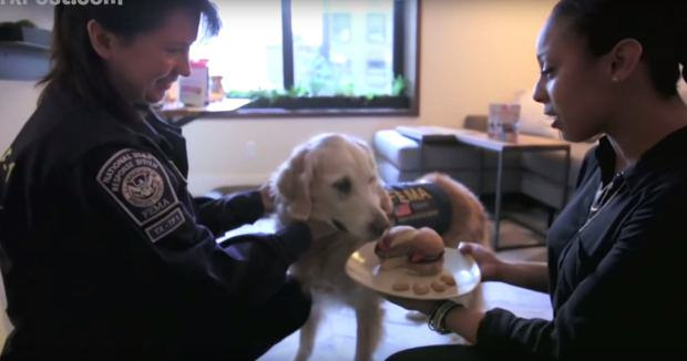 UNILAD dog911 45 Last Surviving 9/11 Rescue Dog Has Awesome 16th Birthday