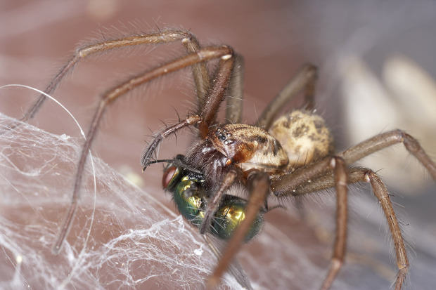 UNILAD giant house getty8 Ten Spiders Coming To Live With You This Autumn