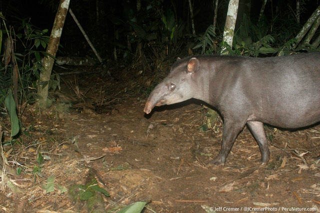 UNILAD rainforest animals 43 Guy Sets Up Camera Trap In Amazon Jungle And Snaps Rare Animals