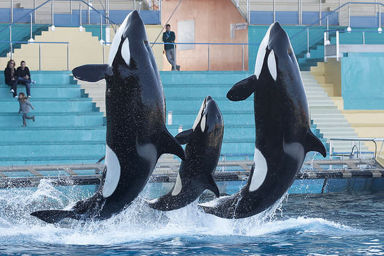 UNILAD seaworld 25 SeaWorld Confirms It Will No Longer Accept Whales Stolen From The Wild