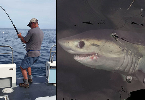 Eight Foot Shark Caught By Fisherman Off Coast Of Sunderland