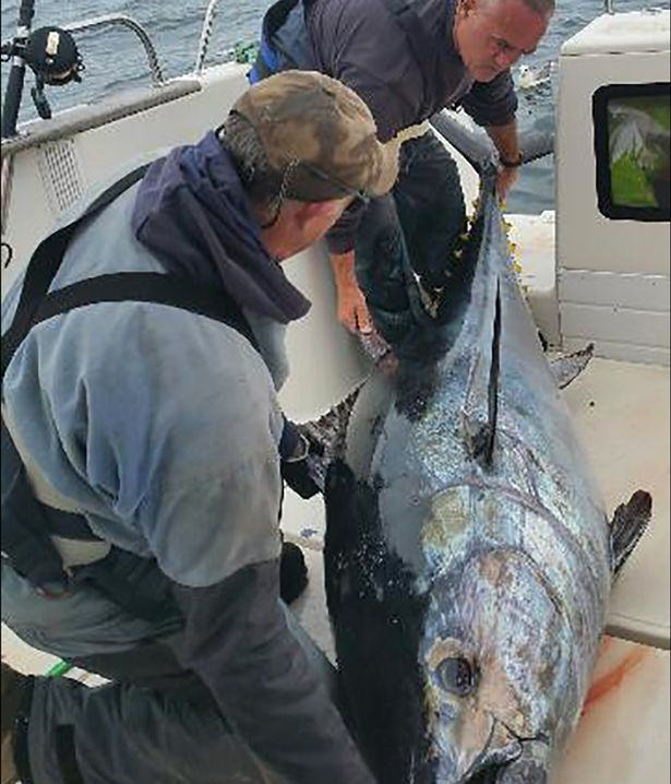 UNILAD tuna fish 27 Welsh Fishermen Catch Monster Tuna Fish Worth A LOT Of Money