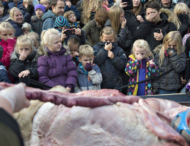 UNILAD The dissection of a lion at the zoo in Odense Denmark 412 Lion Brutally Cut Open In Front Of Kids During Public Dissection At Zoo