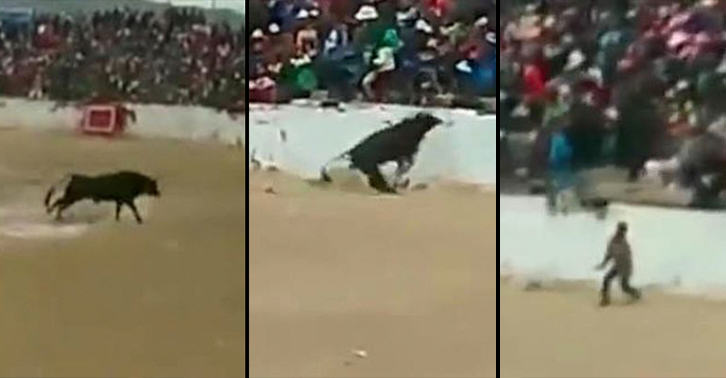 UNILAD bull jump 4664522072 Terrifying Moment Four People Are Injured After Bull Jumps Into The Crowd