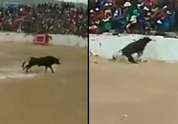Terrifying Moment Four People Are Injured After Bull Jumps Into The Crowd