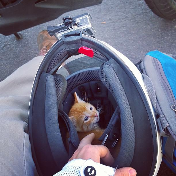 UNILAD kitten in helmet53673 Daring Motorcyclist Rescues Kitten At A Busy Intersection