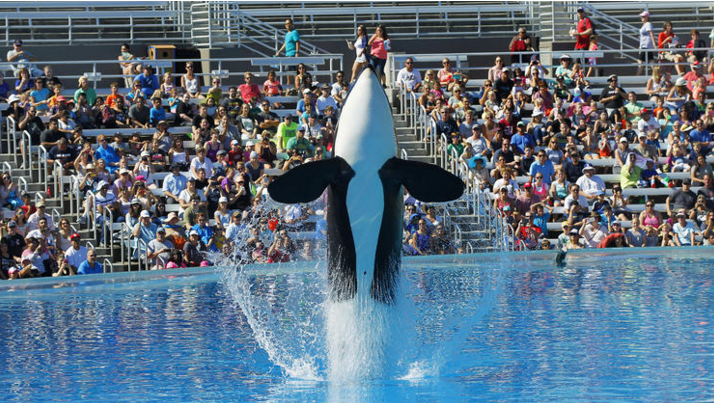 UNILAD Screen Shot 2015 11 10 at 12.45.00 pm17601 Killer Whale Shows To Be Phased Out At SeaWorld