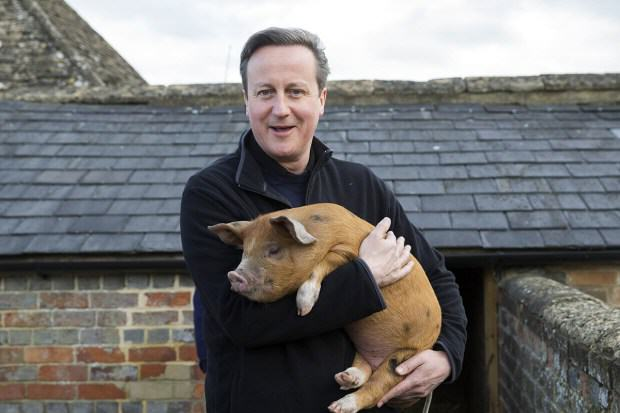 UNILAD david cameron petition 357848 MPs May Have To Debate A Vote Of No Confidence In David Cameron