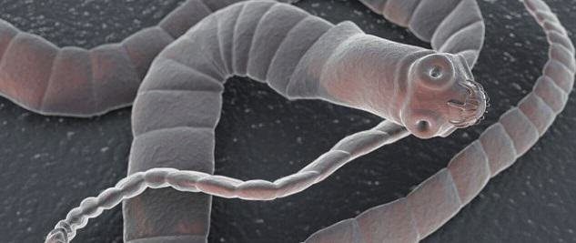 UNILAD tapeworm99366 These Are The Top 10 Deadliest Animals In The World