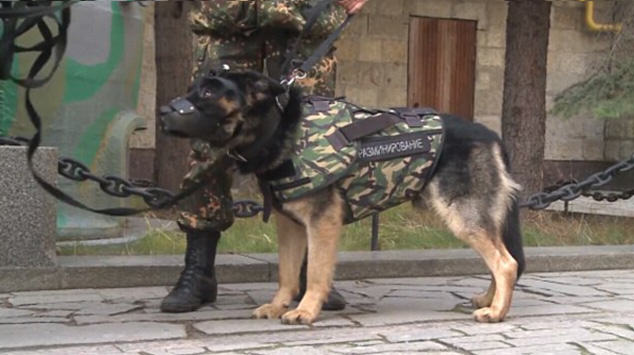 dog1 Russian Police Dogs To Be Fitted With Armour After Paris Attacks
