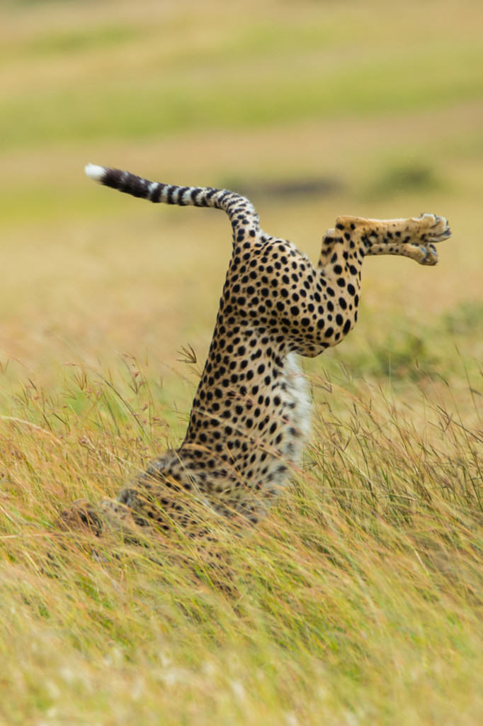 wildlife awards 13 The Winners Of The 2015 Comedy Wildlife Photography Awards Have Been Revealed