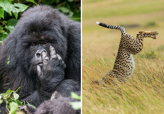The Winners Of The 2015 Comedy Wildlife Photography Awards Have Been Revealed wildlife awards WEB
