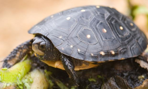 Heres Why A Guy Smuggled 51 Turtles In His Trousers 3238