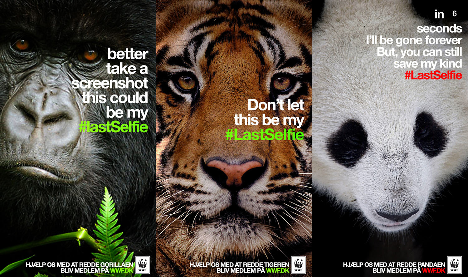 WWF LastSelfie20140415040638 When Social Media Is A Force For Good