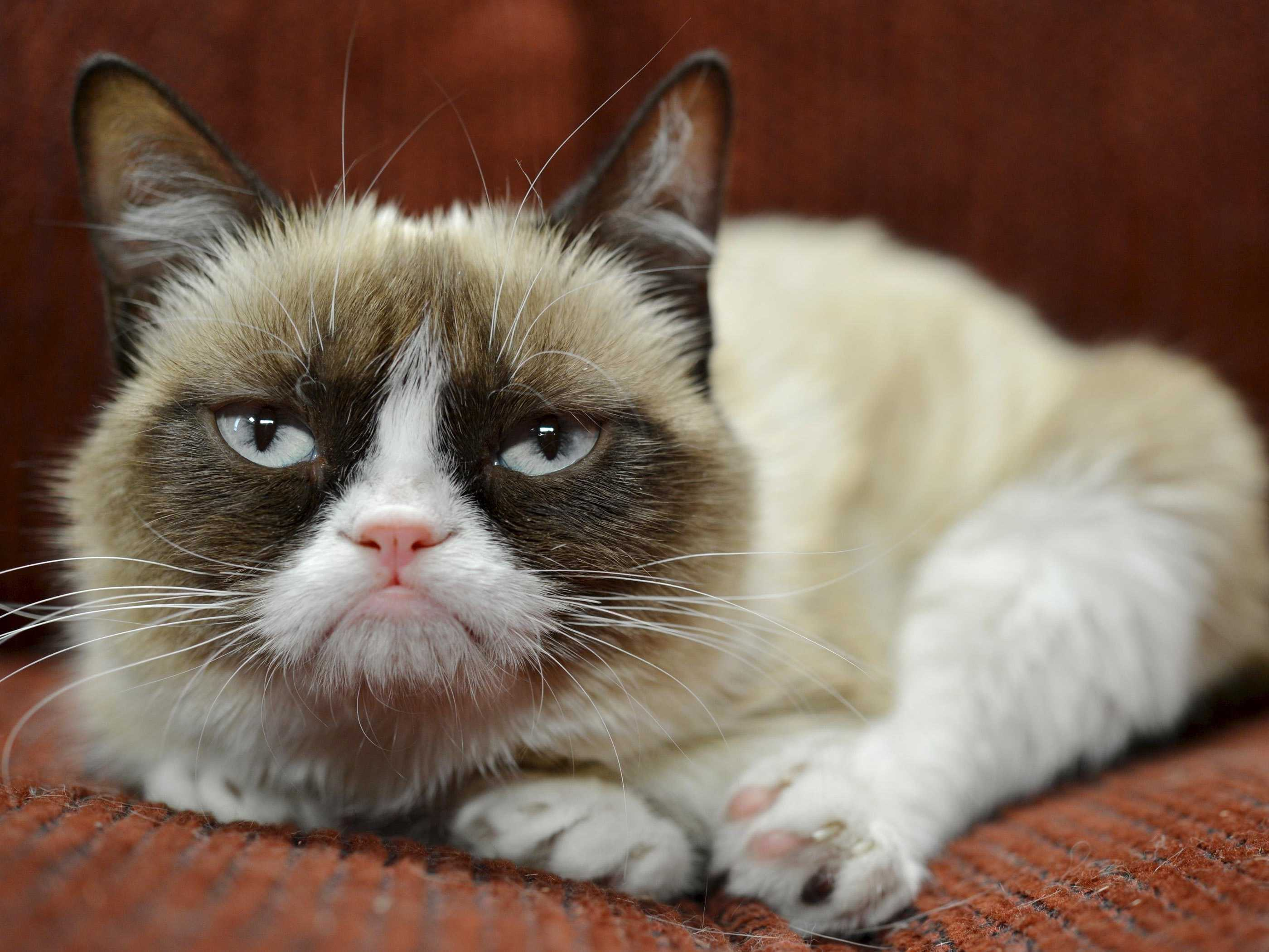 grumpy cat has earned her owner nearly 100 million in just 2 years