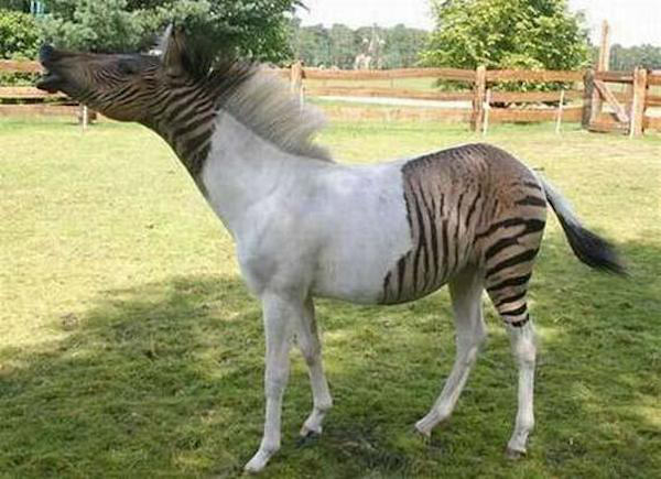 le2fk1u Some Crazy Animal Hybrids That Actually Exist
